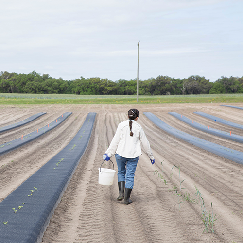 Photo of woman carrying something through field of crops