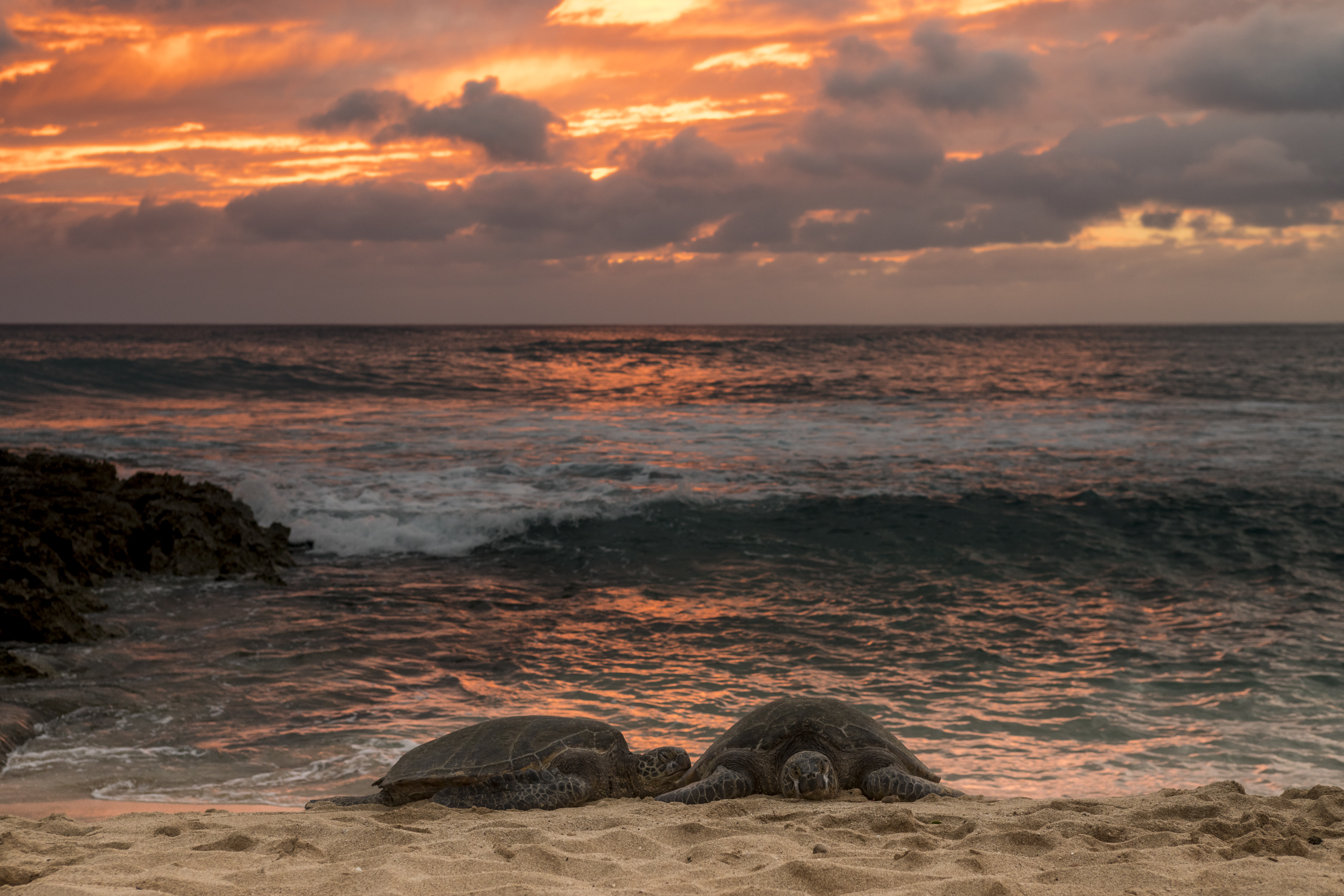 photo of turtles on beach at sunset