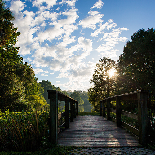 picturesque florida landscape bridge sky and trees