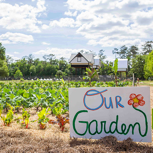 field and fork garden photo